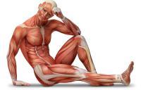 какие мышцы работают во время сидения